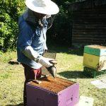 Pasieka dla Pociech – pszczoły, dzieci, konie i… Nowy projekt Fundacji Pociechom
